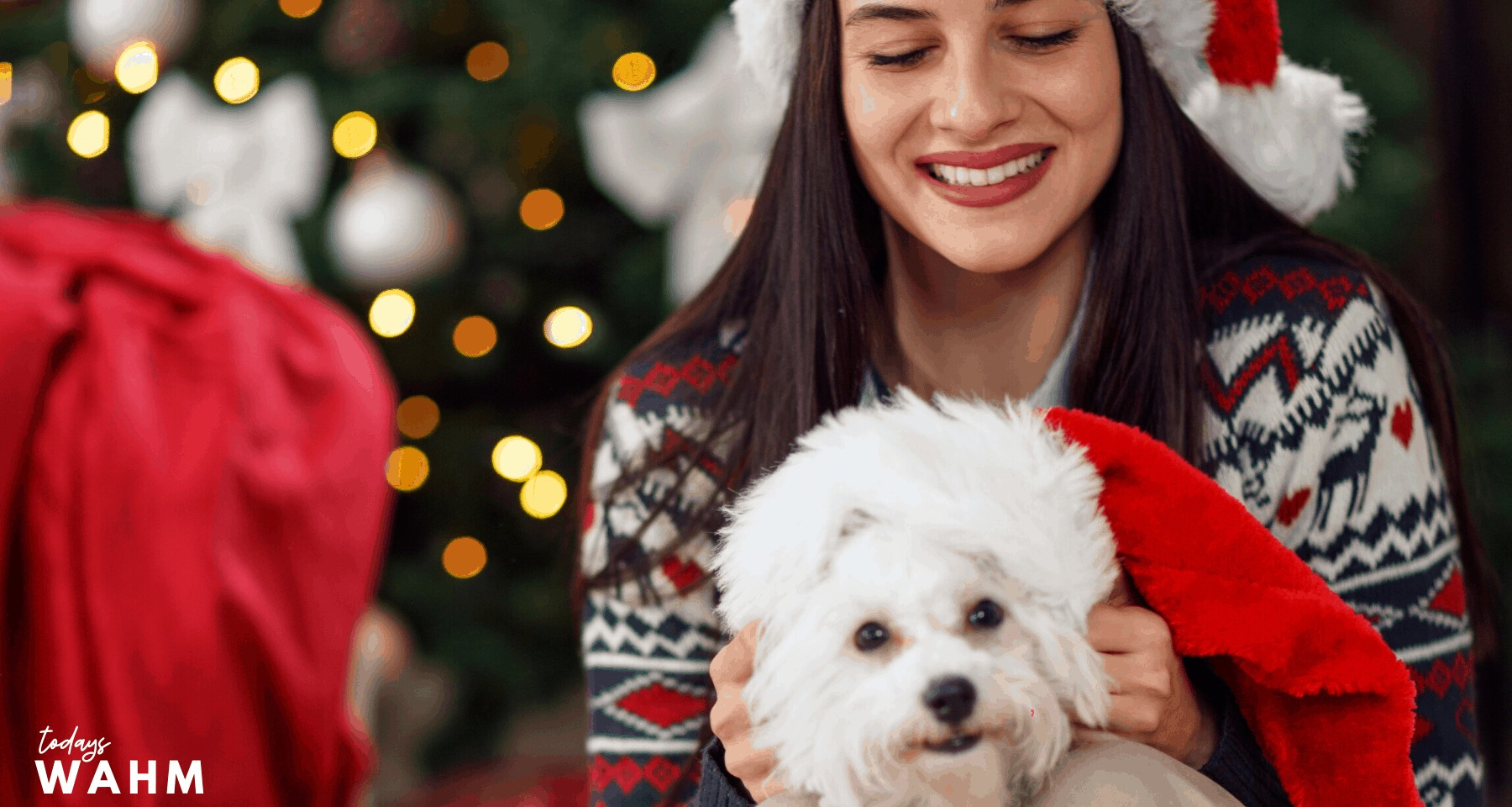 4 Vital Things to Consider Before Adopting a Pet for Christmas