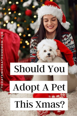 things to consider before getting a pet for Christmas